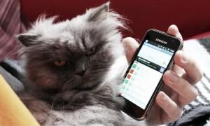 hello this is app cat vegan kosmetik android