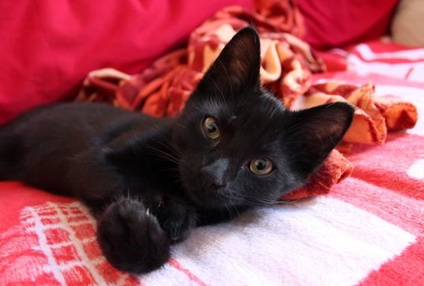Shodan Black Cat schwarze Katze vegan
