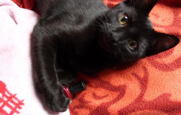 shodan deborah lippmann nagellack vegan katze cat