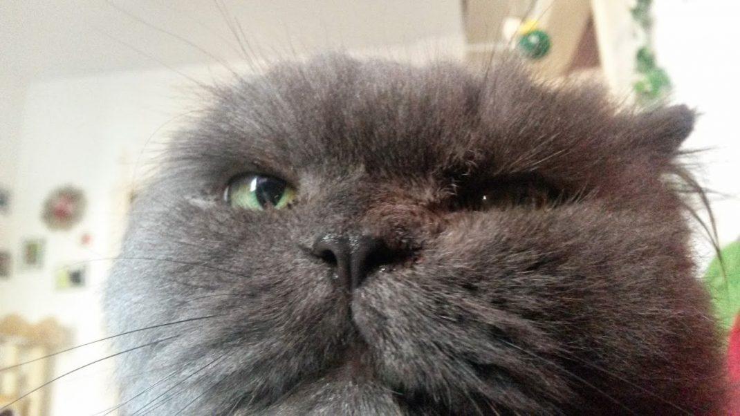 Mimi Katze cat selfie stick
