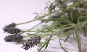 Haarkräuter Juli kosmetik vegan Haare Kräuter Pflanzen Lavendel Rinse Spülung Lavender Gesichtswasser Toner diy selbstgemacht