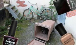 Waschbaer raccoon Kassel vegan kurzwort nagellack thumbnail