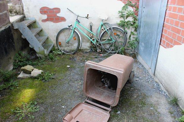 Waschbaer raccoon Kassel vegan