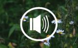 Audio podcast beauty kosmetik vegan marketing greenwashing erbse