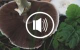 audio podcast vegan beauty blog kosmetik Vivaness 2016 Mut Nein sagen Selbstbewusstsein