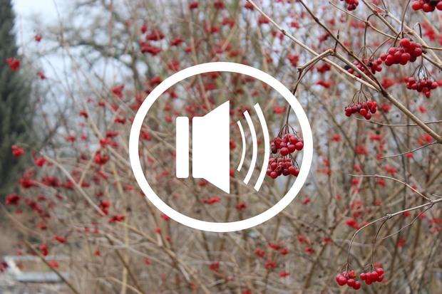 Audio podcast beauty kosmetik vegan erbse ungeschminkt sein gurus minimalismus öko esoterik