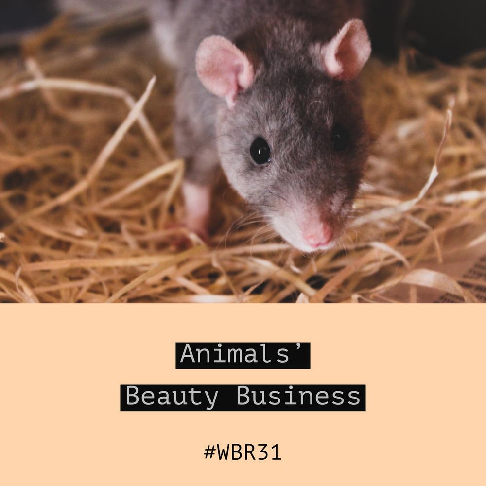 animals-beauty-business-waschbärenreport-kosmetik-vegan-Tierversuche-cruelty-free-the-ordinary-hourglass-schmidts-naturals